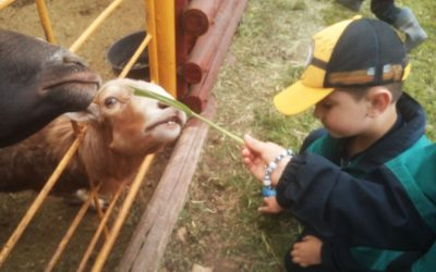 Parque Temático Faunaticos – Cursos Preescolar